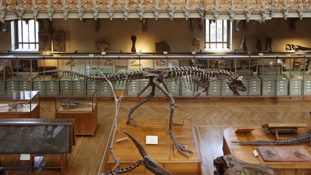 Carnotaurus sastrei © Eric Sander