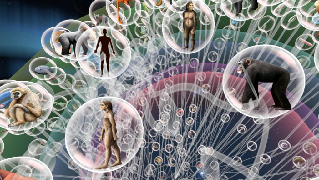 Voyage au cœur de l'Évolution - arbre du vivant © MNHN - Orange