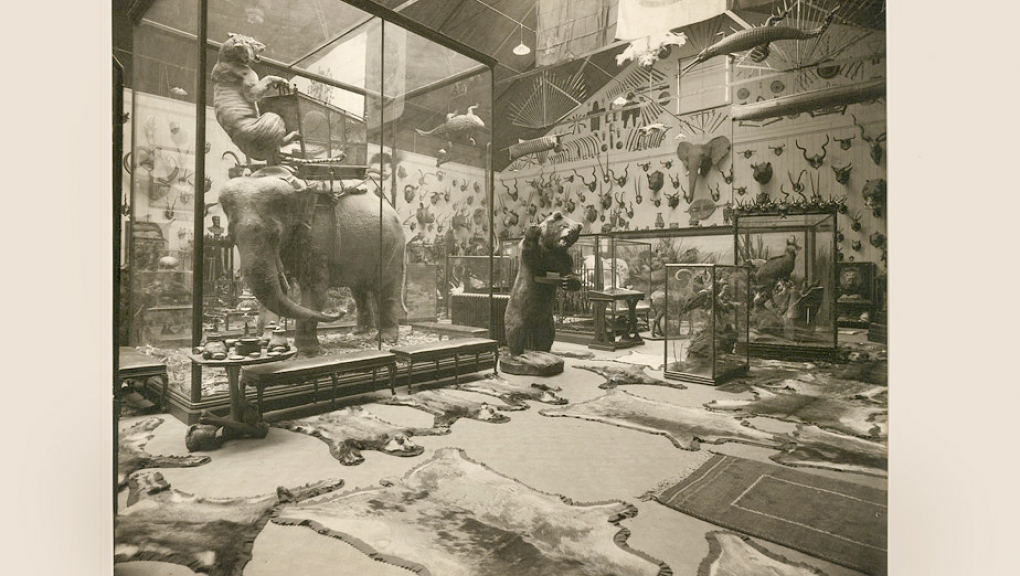 Collections du duc d'Orléans au Musée de Wood Norton (Angleterre) - C. Vandyck © MNHN - Direction des Bibliothèques