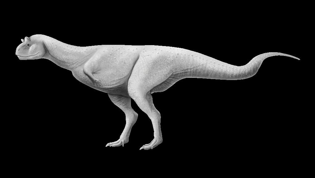 Carnotaurus sastrei (illustration) © Camille Dégardin