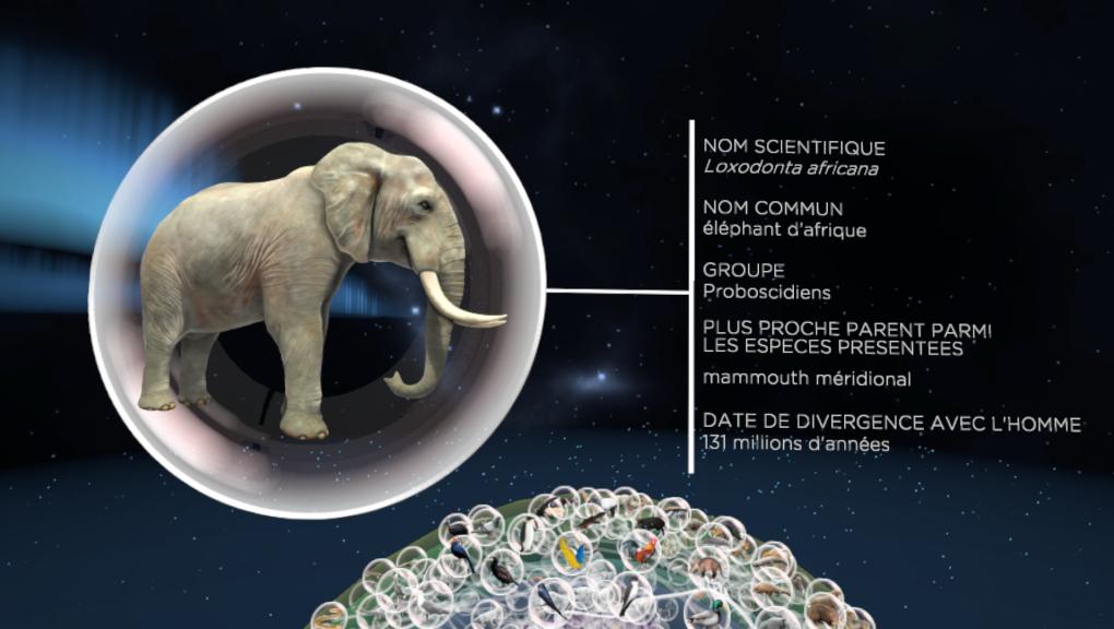 Voyage au cœur de l'Évolution - éléphant © MNHN - Orange