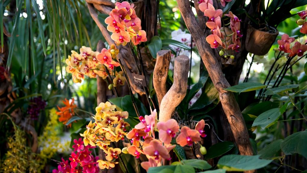 Mille et unes orchidées © MNHN - Bruno Jay