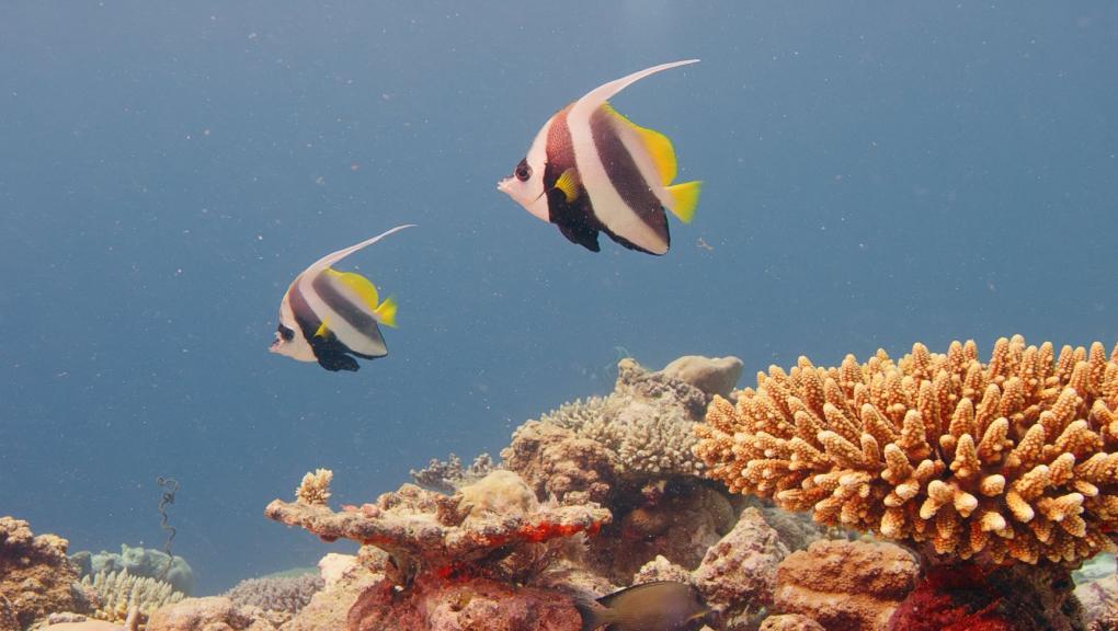 Les récifs © Mardi8 - Expéditions Spectacles - MNHN