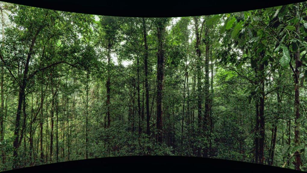 Vignette - Forêt tropicale © Mardi8 / Expéditions Spectacles / MNHN