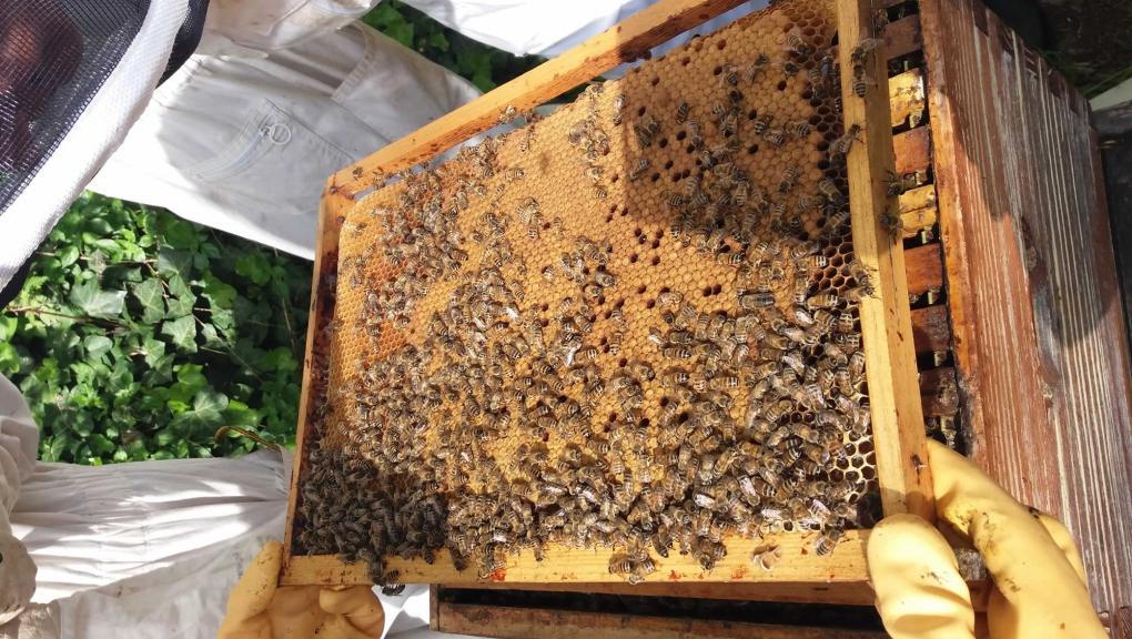 L'apiculture au naturel © MNHN - M. Tourolle