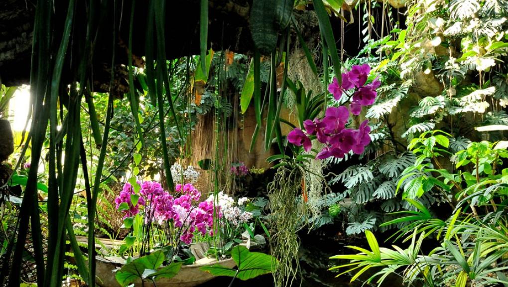 Mille et une orchidées 2014 © MNHN - FG Grandin