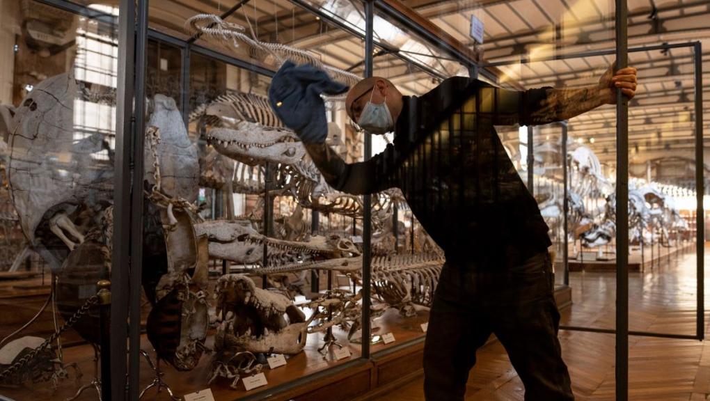 Vitrine des reptiles en Anatomie comparée. Le verre, omniprésent dans la galerie et élément essentiel de la muséographie et de la scénographie du lieu, nécessite un soin particulier © MNHN - A. Iatzoura