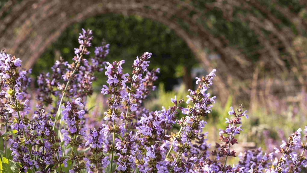 Perspective du Jardin des Plantes 'en friche' © MNHN - Agnès Iatzoura