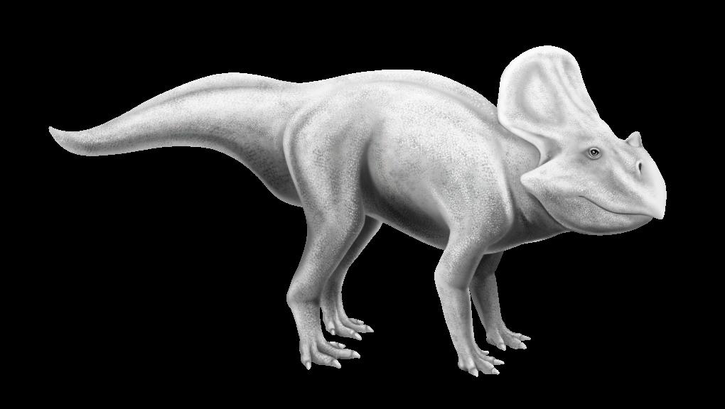 Protoceratops andrewsi © Camille Dégardin