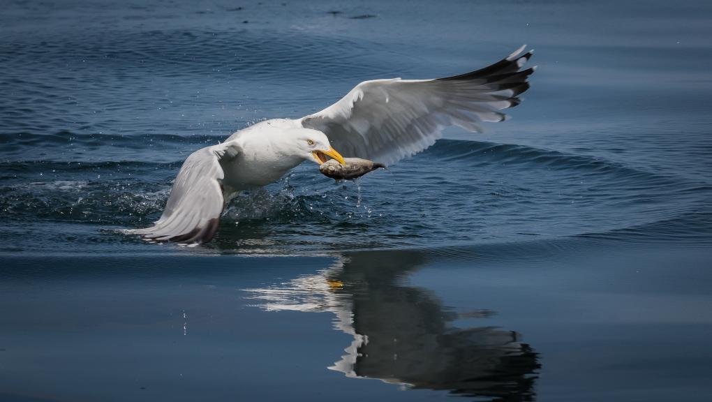 Vous pouvez choisir de représenter la faune qui cohabitent avec l'océan.