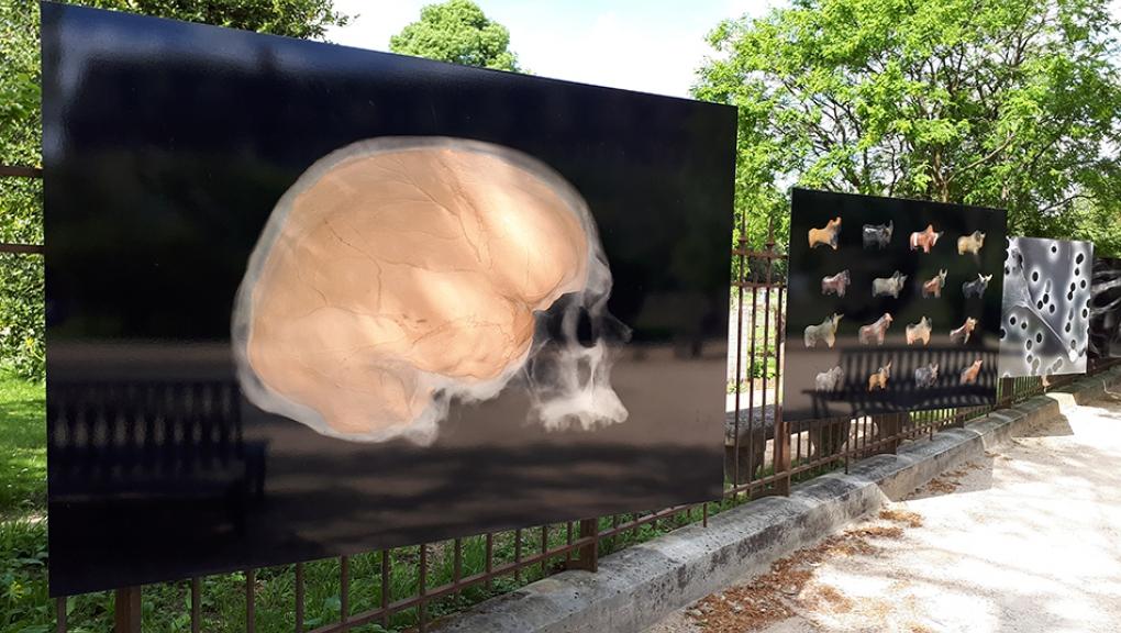 Secrets dévoilés - crâne d'homme de Cro-Magnon © MNHN - S. Daniel