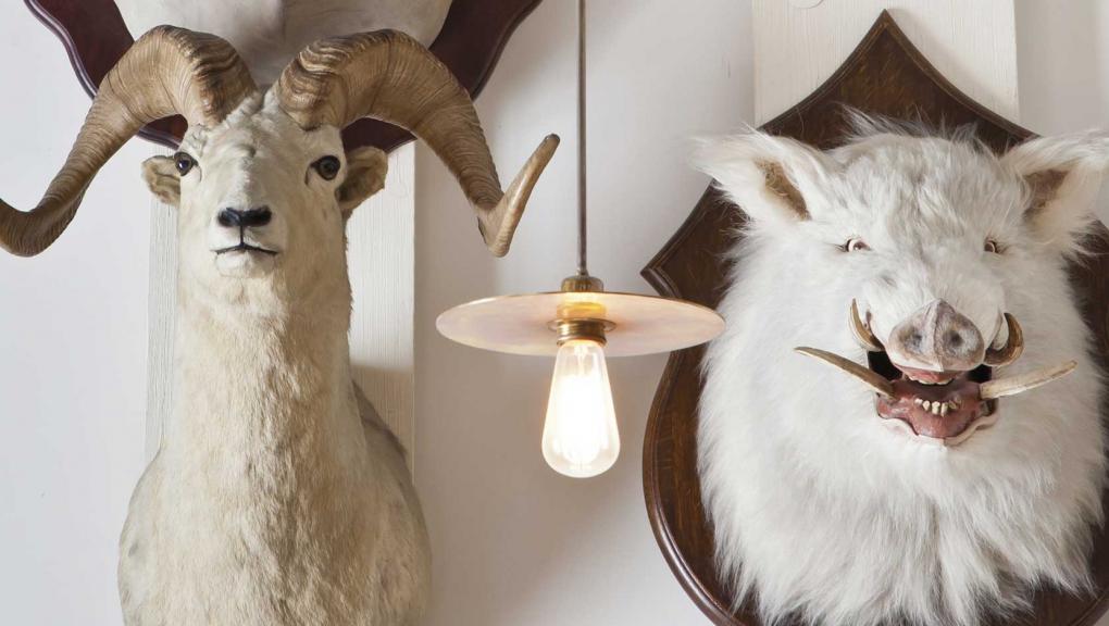Têtes d'animaux © Musée de la chasse et de la nature