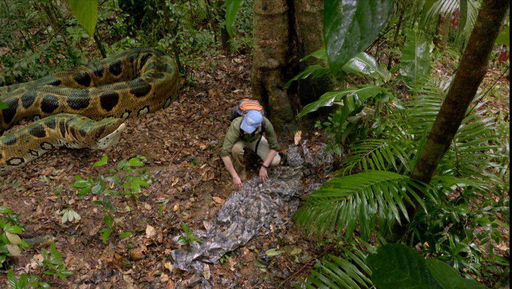 Une rencontre virtuelle entre un titanoboa et le scientifique Alex Hastings © French Connection Films