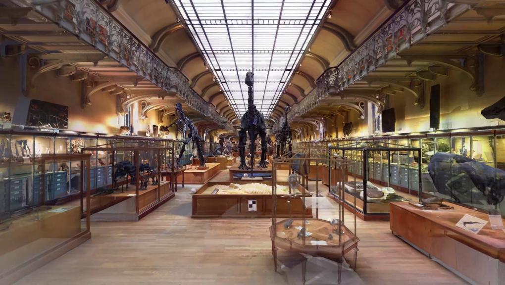 Galerie de Paléontologie et d'Anatomie comparée en 3D © MNHN