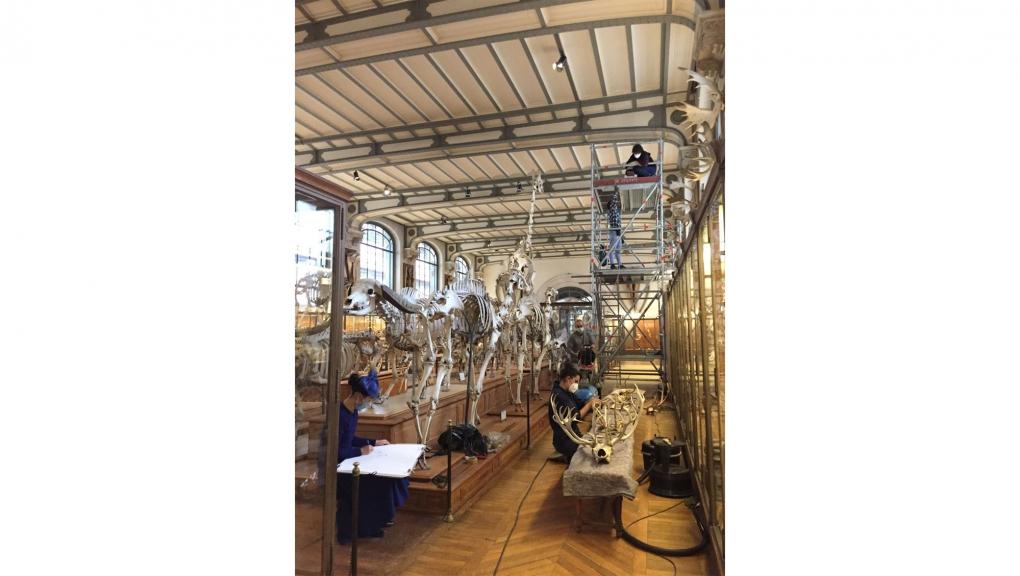 Vue d'ensemble du chantier. Christelle Tea, artiste en résidence au Muséum était présente lors du chantier © GPAC / MNHN