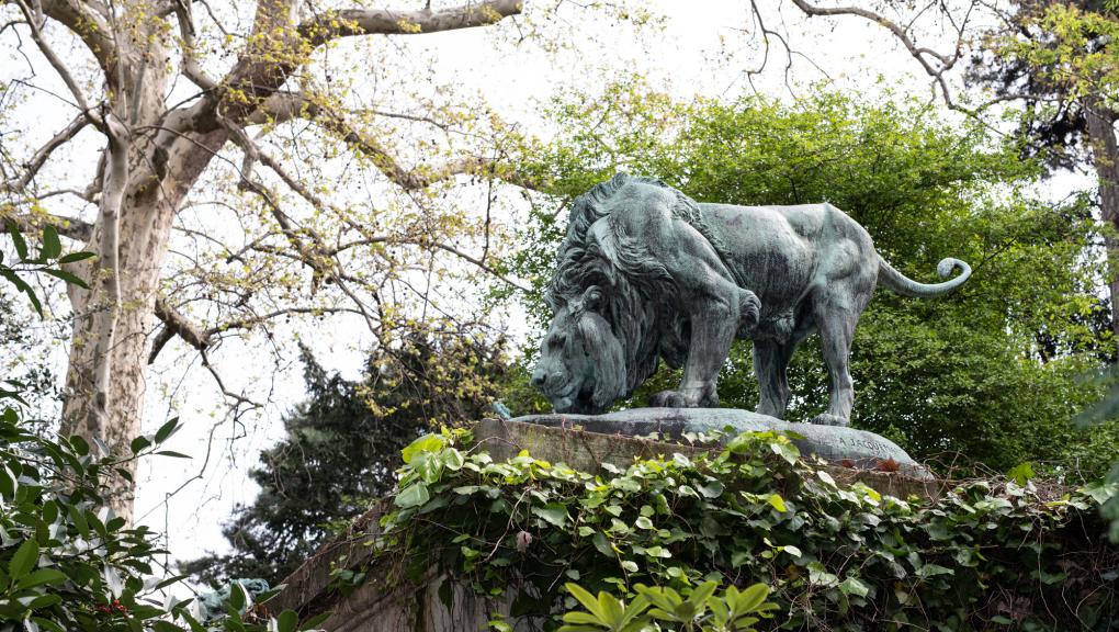 Lion © MNHN – A. Iatzoura