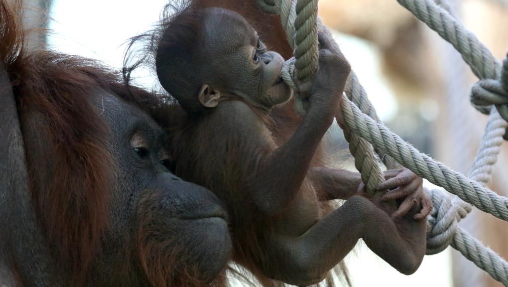 Théodora apprend à Java à se déplacer sur des cordes © E. Baril