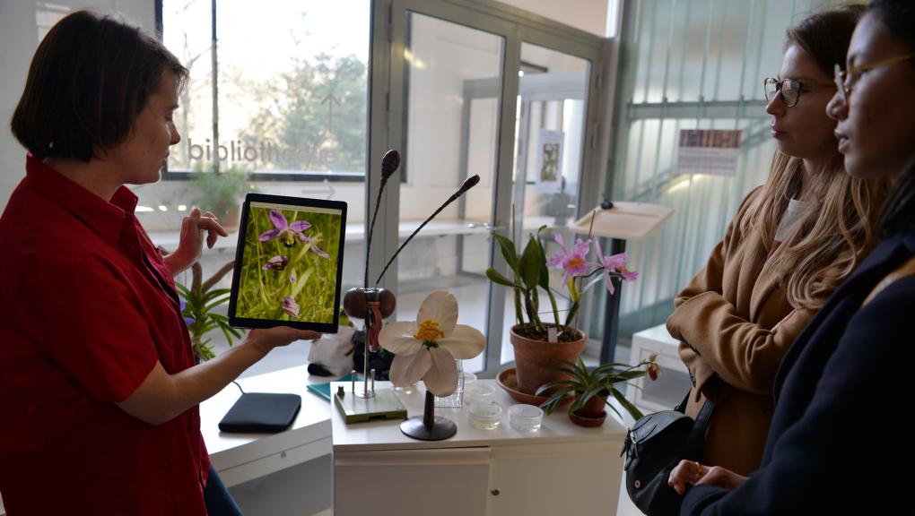 Animation Flash - Zoom sur les orchidées © MNHN – J-C. Domenech