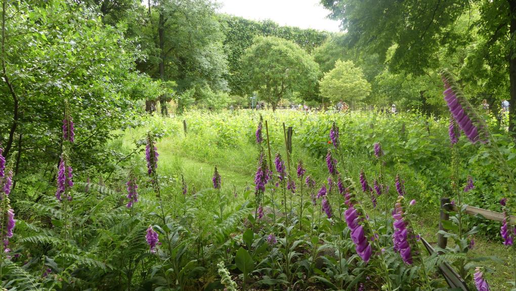 Le jardin écologique au printemps © MNHN – C. Duwicquet