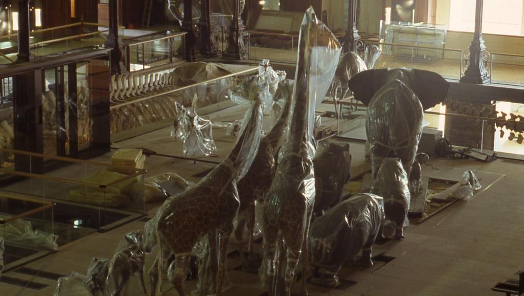 Retour des animaux naturalisés après la restauration de la Galerie © MNHN - Bernard Faye