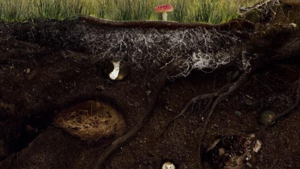 Sous la surface du sol © Mardi8 / Expéditions Spectacles / MNHN