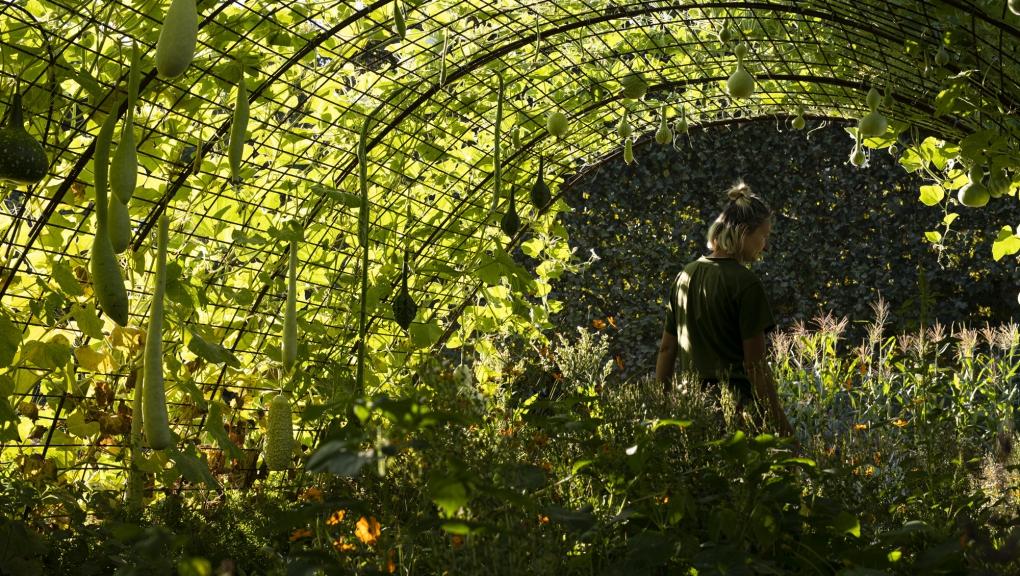 Cucurbitacées au Jardin des Plantes (2)