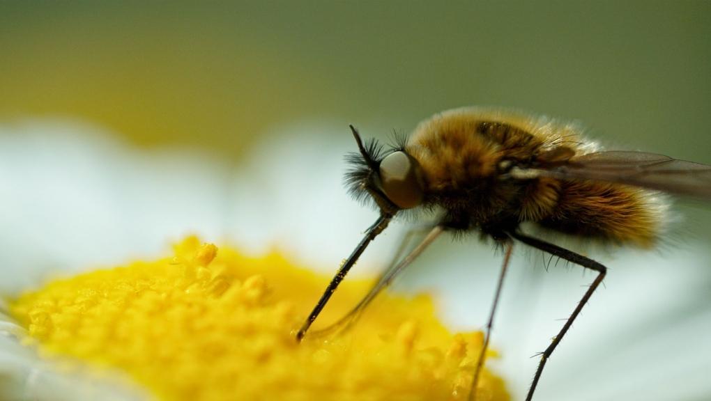 Les insectes pollinisateurs © Mardi8 / Expéditions Spectacles / MNHN