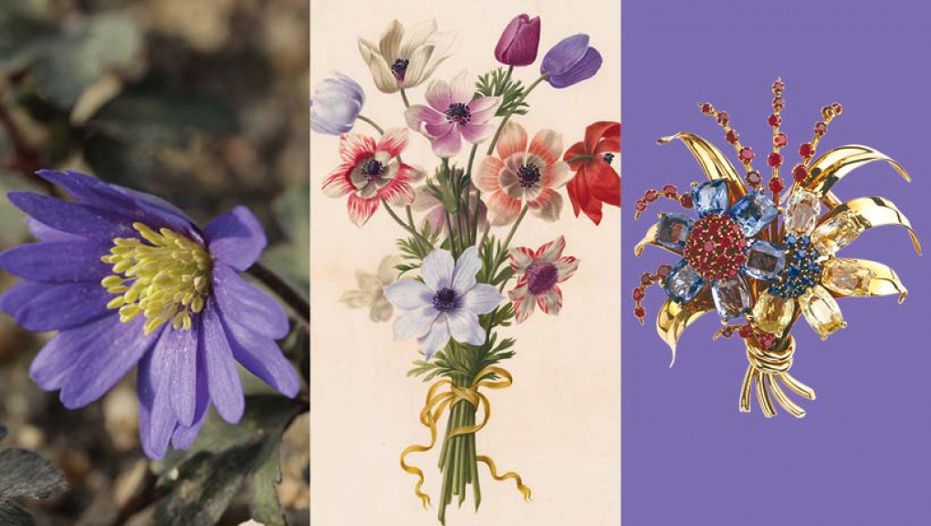 Calendrier floral – Avril : les anémones © MNHN / Collection Van Cleef & Arpels