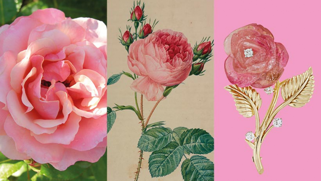 Calendrier floral - Juin : les roses © MNHN / Collection Van Cleef & Arpels