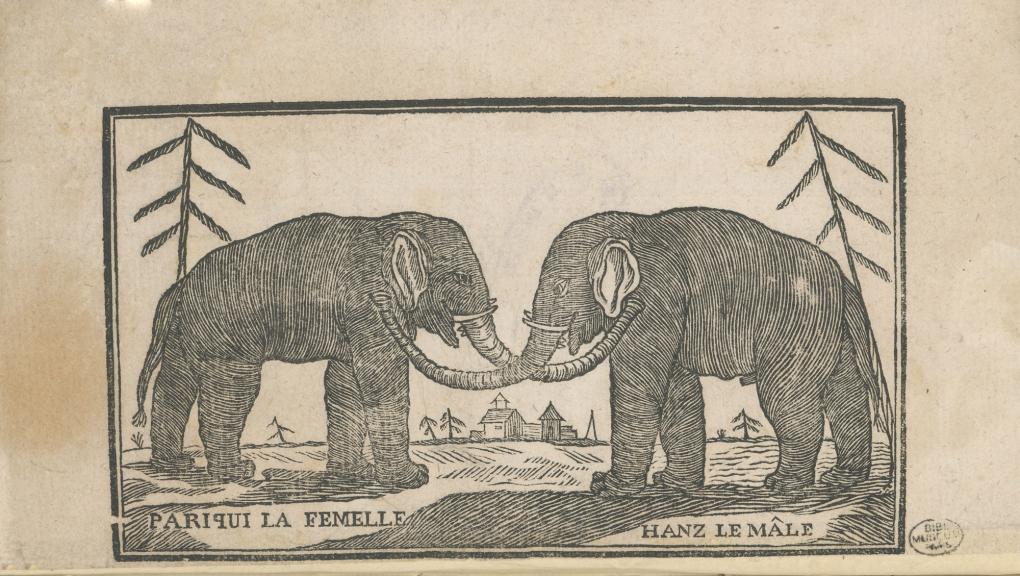 Hanz et Parkies, le couple d'éléphants mélomanes © MNHN - Direction des bibliothèques et de la documentation