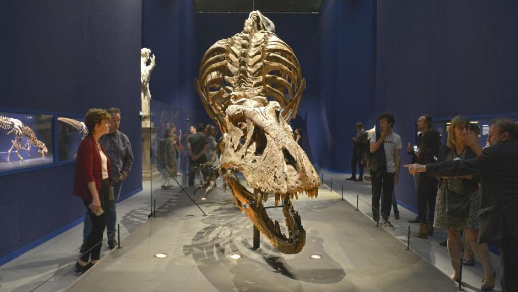 "Exposition ""Un T. rex à Paris"" - Trix, Tyrannosaurus rex © MNHN - JC Domenech"