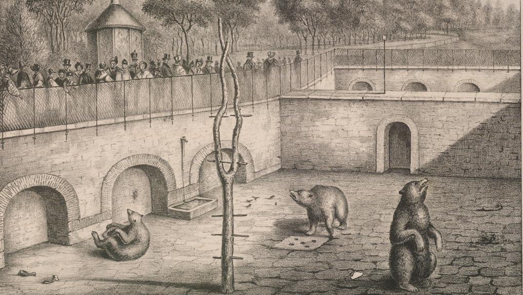 La fosse aux ours (Acarie-Baron, Adrien - XIXe siècle) © MNHN - Bibliothèque centrale