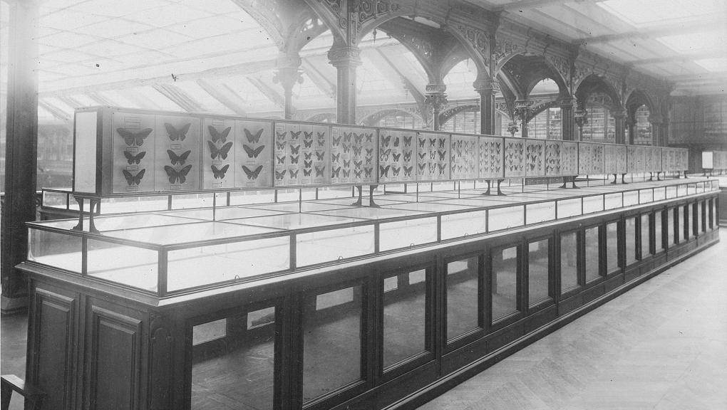 Galerie de Zoologie en 1892. 2e étage. Vitrines d'entomologie - Fonds Pierre Petit © MNHN - Direction des Bibliothèques