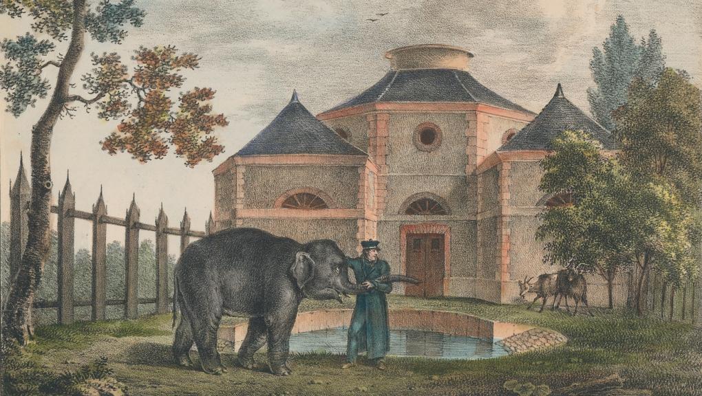 «Le petit éléphant», lithographie de Engelmann, 1821 © MNHN - Direction des bibliothèques et de la documentation