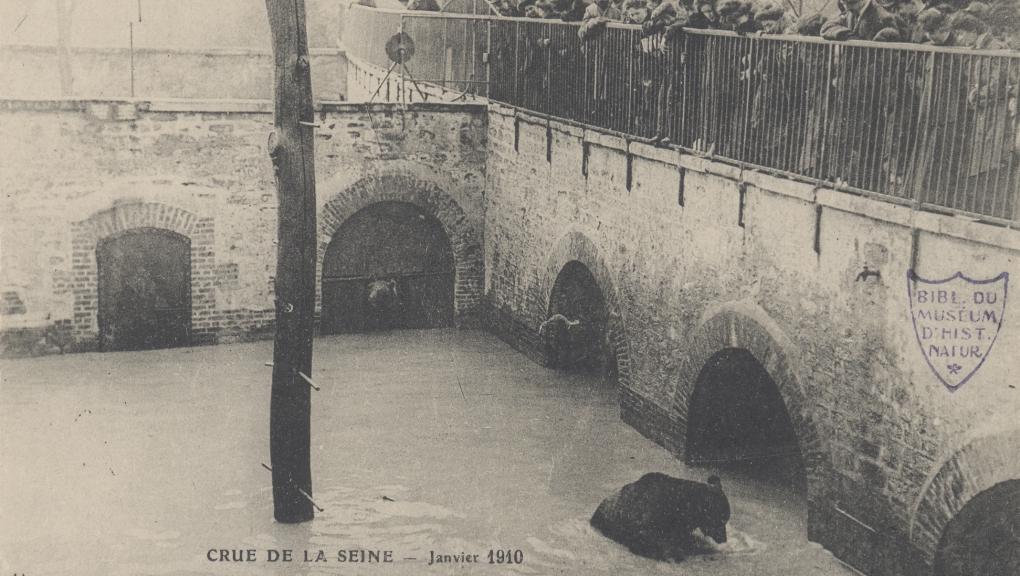 La fosse aux ours lors de la crue de la Seine de 1910 © MNHN - Bibliothèque centrale