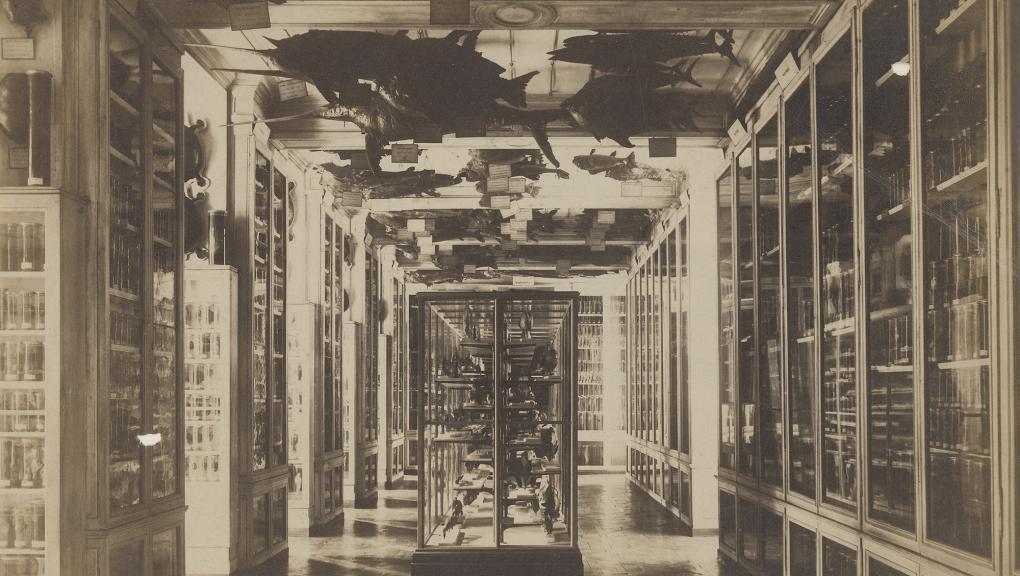 Galerie de Zoologie en 1890. 1er étage. Salle des poissons - Fonds Pierre Petit © MNHN - Direction des Bibliothèques