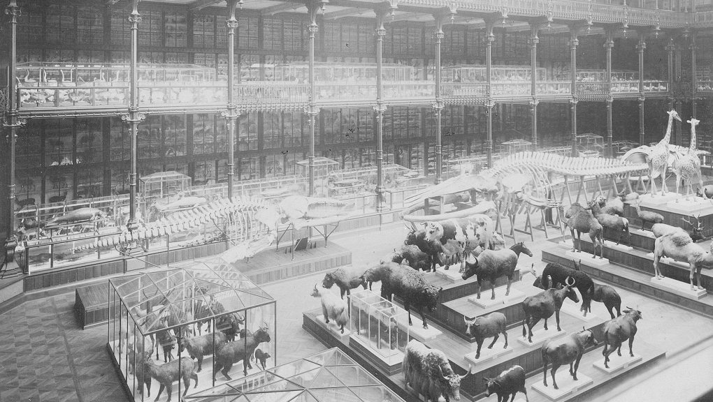 Galerie de Zoologie en 1892 - Fonds Pierre Petit © MNHN - Direction des Bibliothèques