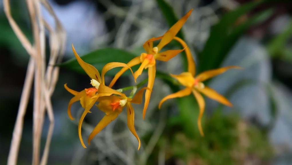Orchidée © MNHN - F.-G.-Grandin