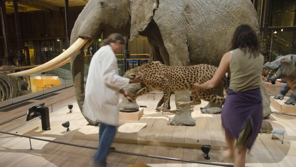 Restauration et nettoyage des espèces © MNHN - JC Domenech