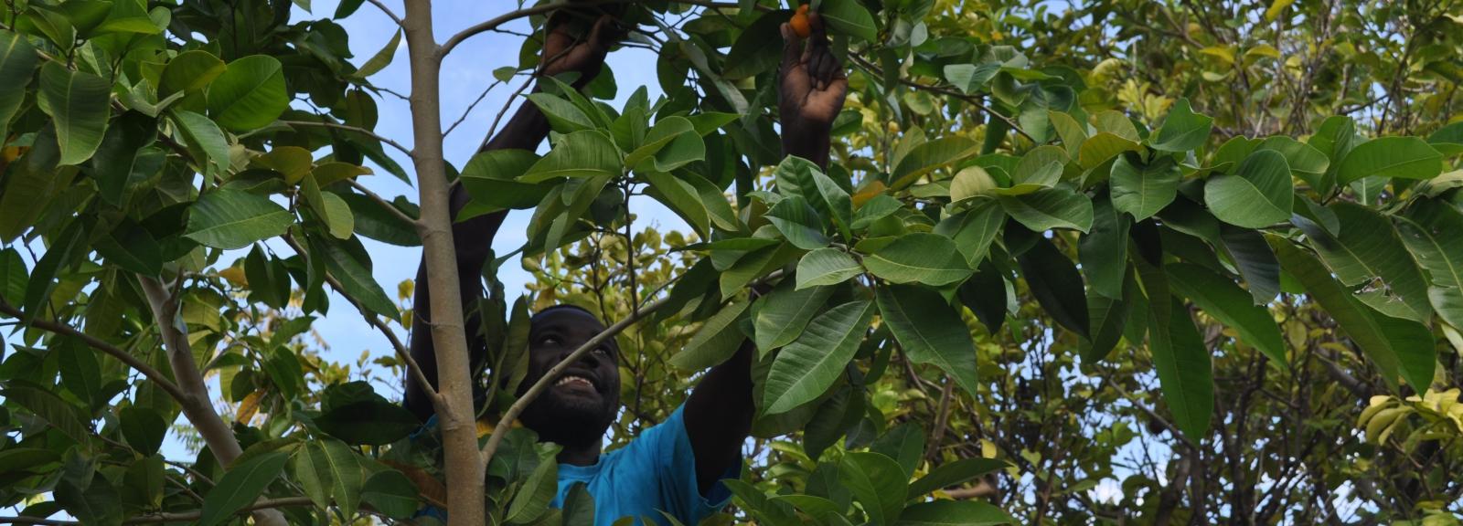 Ces arbres qui nous sauvent © Sadhana Forest pour le programme Forêts Communes