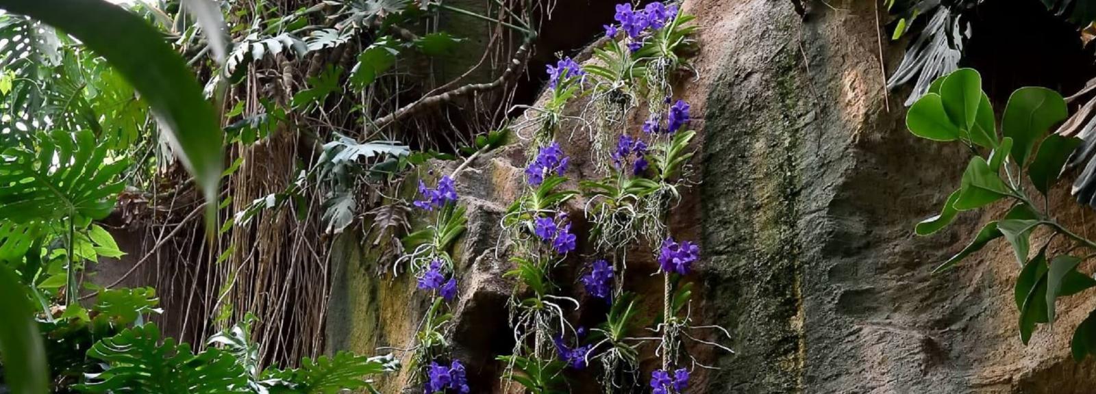 Épiphytes © MNHN - F.-G. Grandin