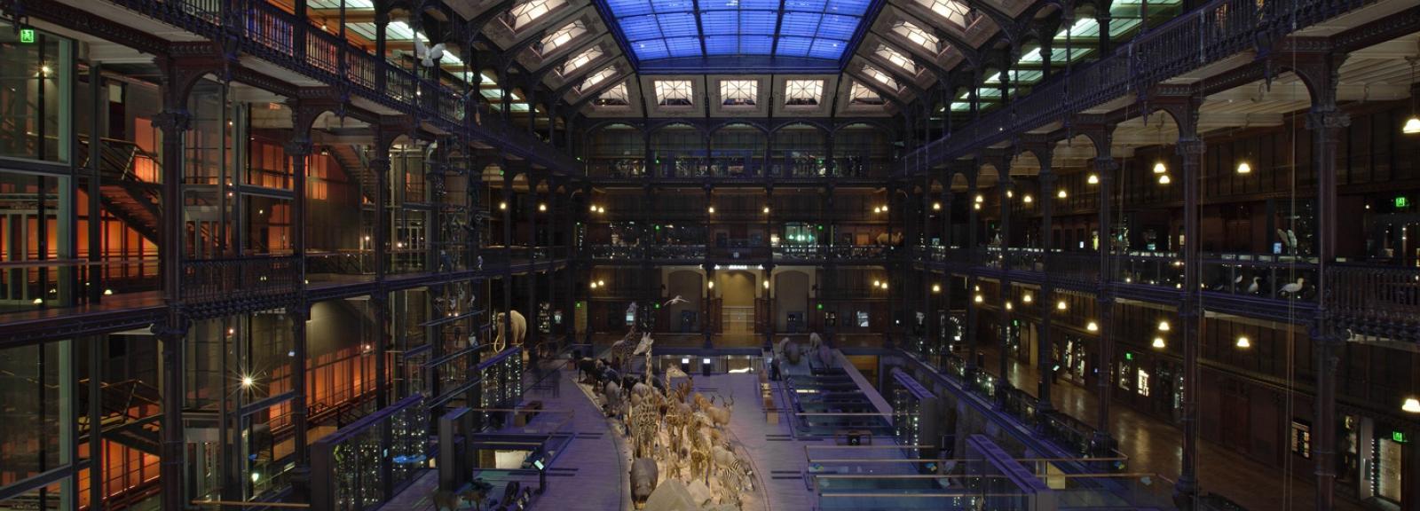 Savane africaine - Grande Galerie de l'Évolution © MNHN - Bernard Faye
