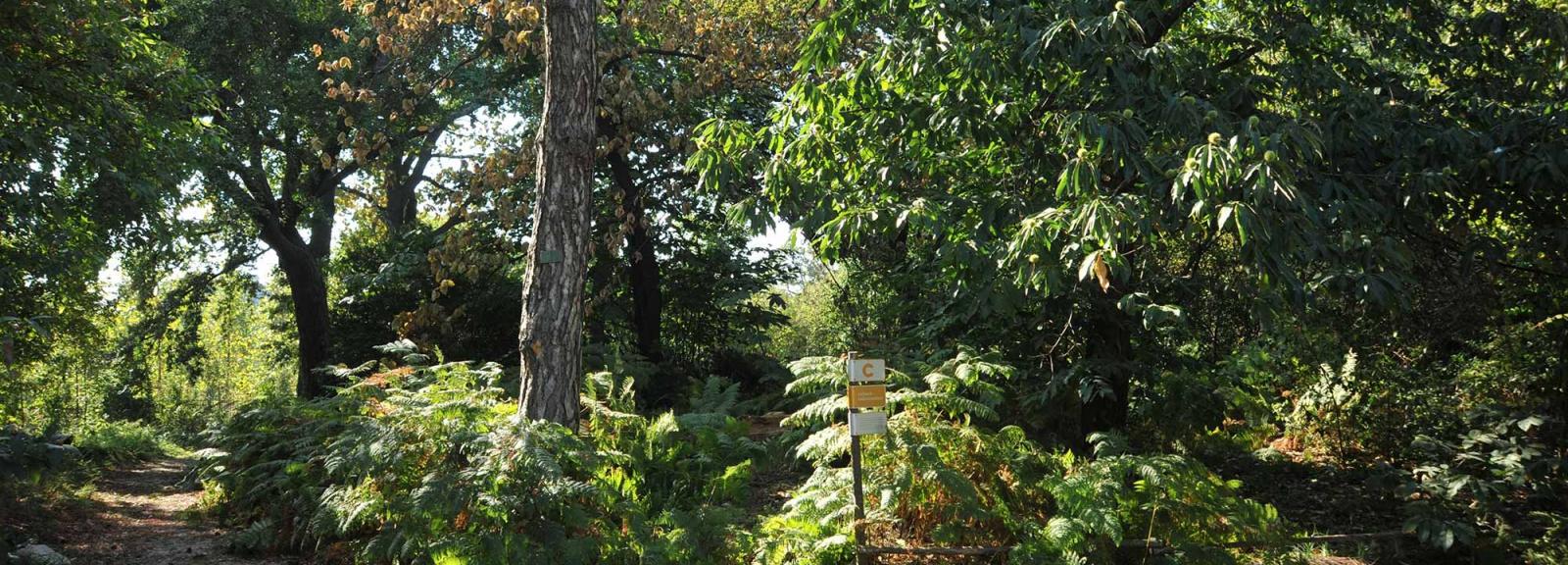 Jardin des plantes - Jardin écologique © MNHN - F.-G. Grandin