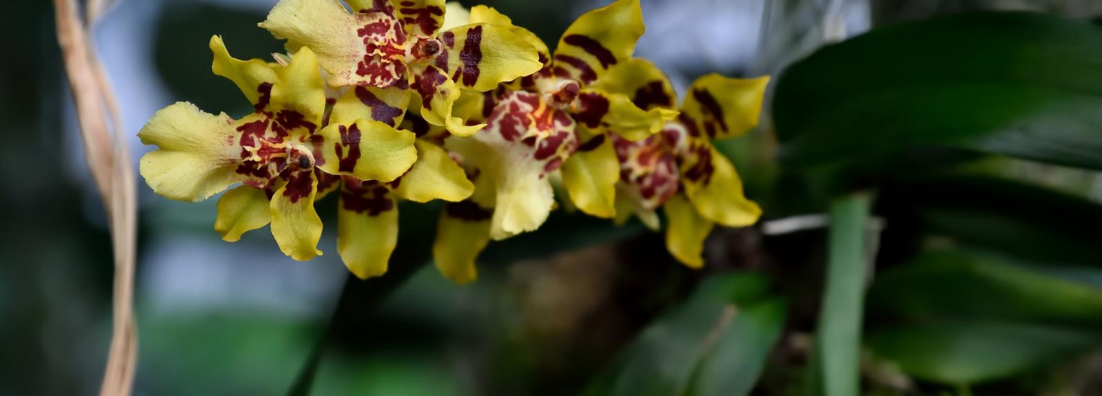 Mille et une orchidées 2019 © F-G Grandin - MNHN