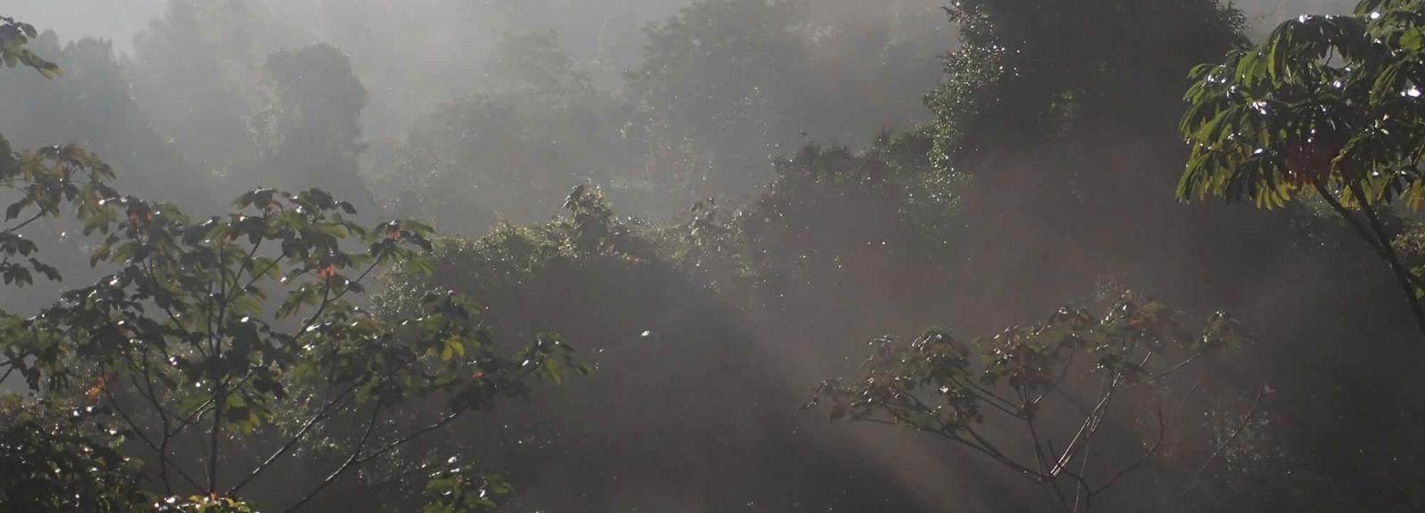 Réserve naturelle des Nouragues en Guyane française © MNHN - O. Marquis