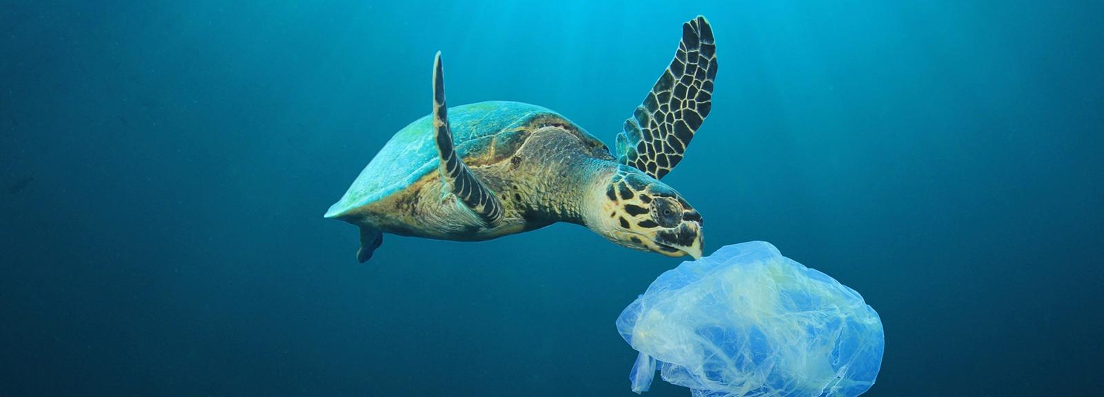 Pollution plastique dans l'océan © Rich Carey