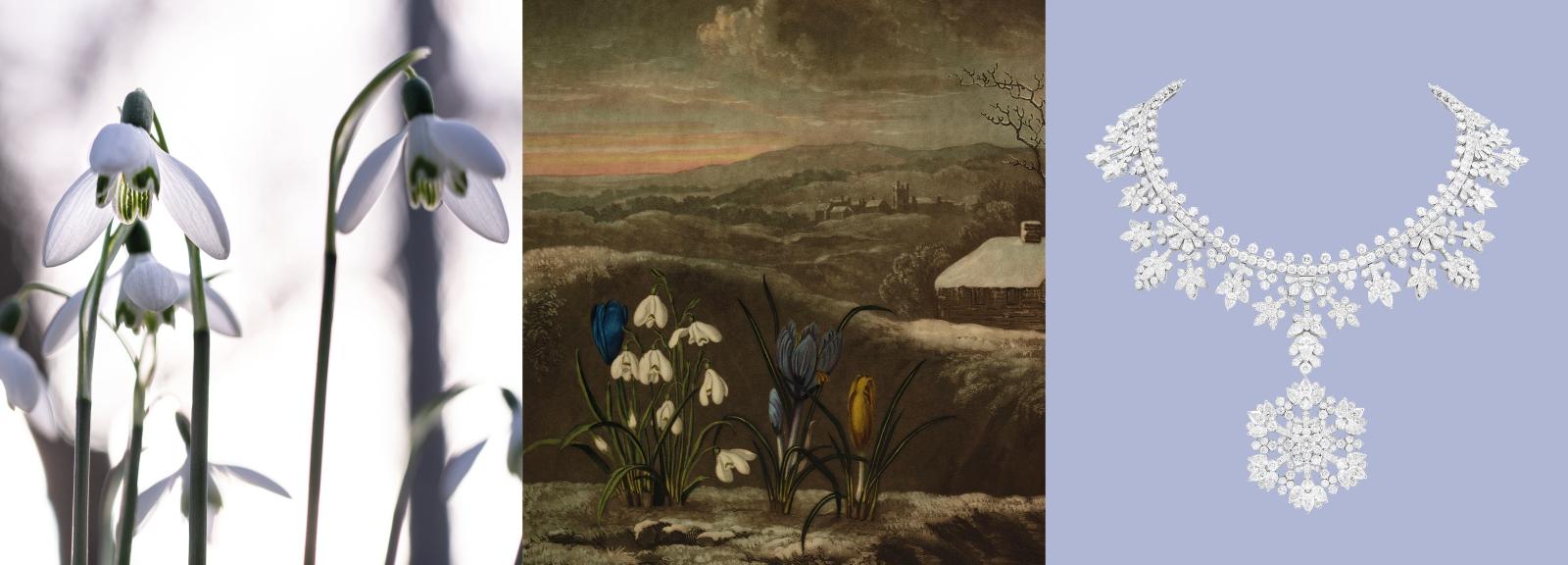 Calendrier floral - Janvier : les perce-neige © MNHN / Collection Van Cleef & Arpels