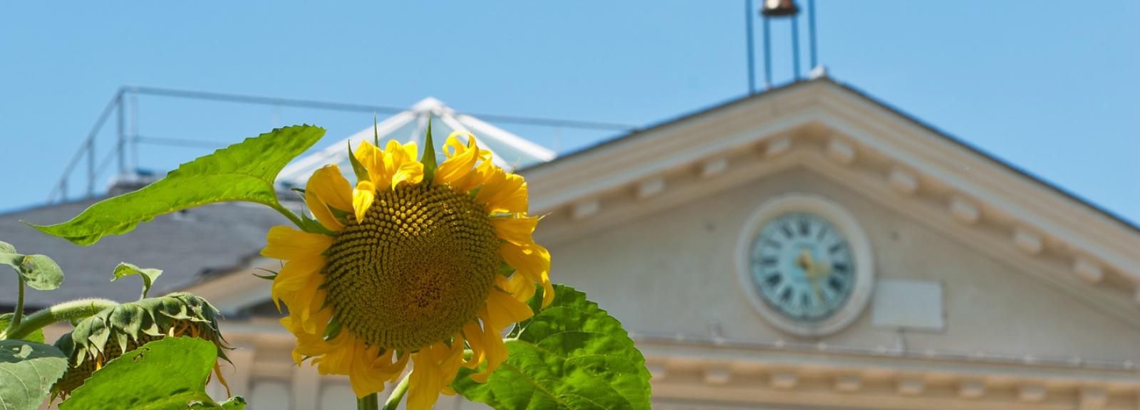 Jardin des Plantes - Grand Amphithéâtre du Muséum © MNHN - Patrick Lafaite
