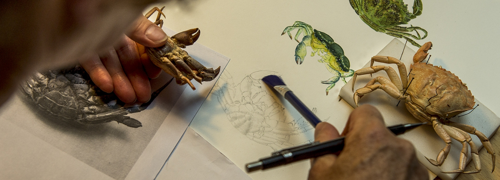 Les dessinatrices © MNHN - Bruno Jay