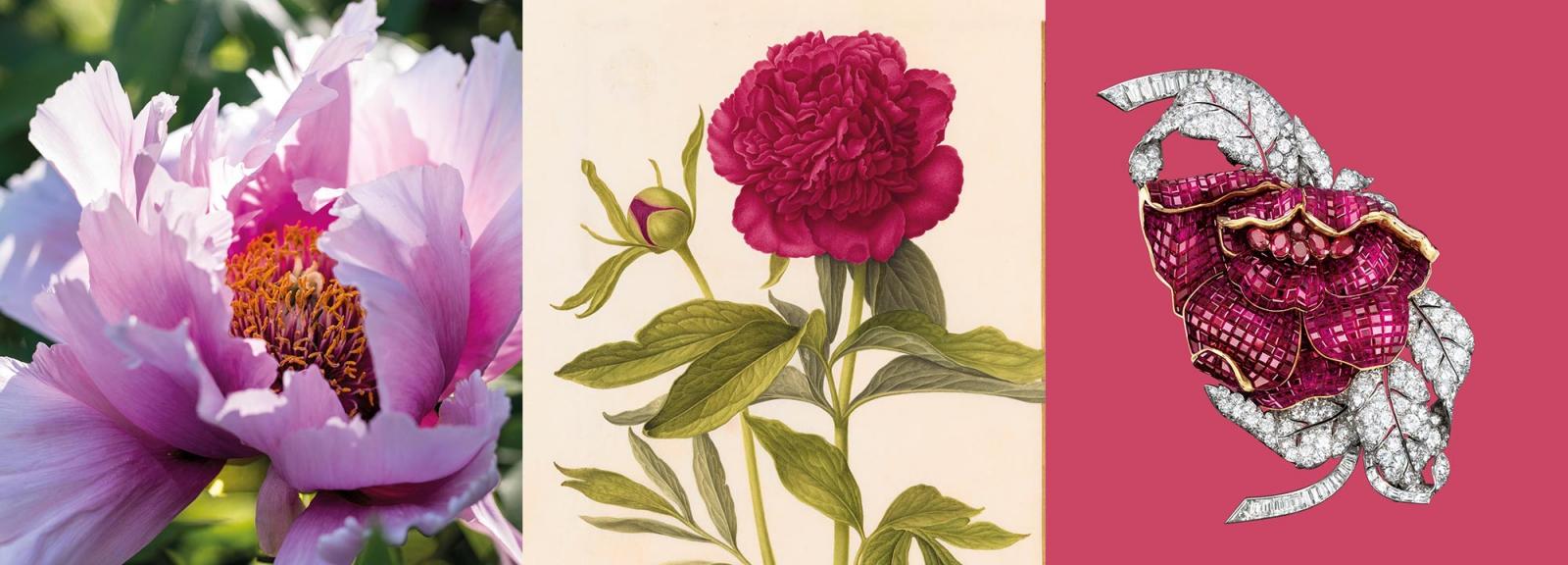 Calendrier floral - Dossier (bandeau)